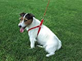 Coastal Pet Products DCP6345RED Nylon Comfort Wrap Adjustable Dog Harness, 3/8-Inch, Red, My Pet Supplies
