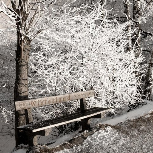 Winterland (Main Theme) -