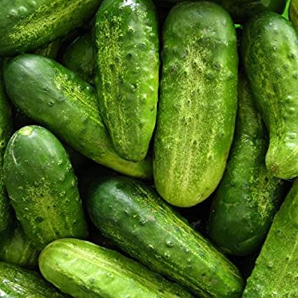 30 pcs Cucumber Seed Garden Early Self-pollinated Vegetable Heirloom Seeds with High Germination Rate