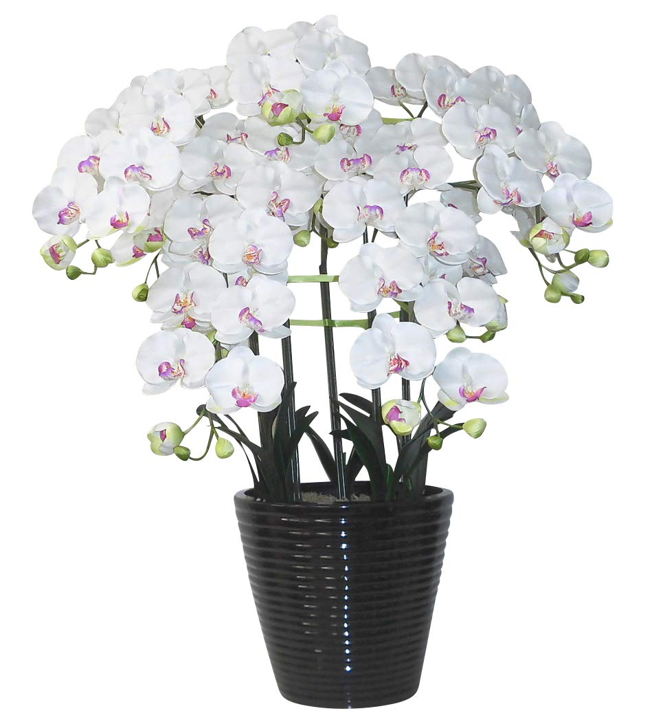 光触媒 造花の胡蝶蘭 鉢植え アートフラワー Lサイズ-5本立 H95cm(白-黒鉢) B00LKE47RC