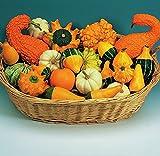 Kings Seeds - Gourd, Ornamental Mixed - 30 Seeds