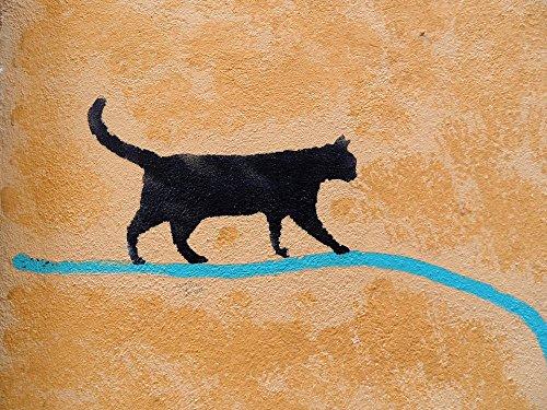 Accent Padova (Home Comforts LAMINATED POSTER Artist Wall Padova Cat Graffiti Poster 24x16 Adhesive Decal)