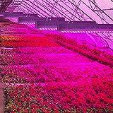 BESTVA DC Series 4000W LED Grow Light Full Spectrum Grow Lamp for Greenhouse Hydroponic Indoor Plants Veg and Flower