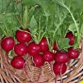 Everwilde Farms - Cherry Belle Radish Seeds - Gold Vault