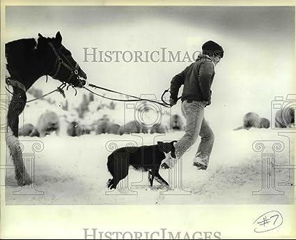 1984 Press Photo Gamarra Dog Amigo Check Sheep In Hells Canyon Oregon
