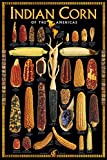 Indian Corn of America - Art Print Poster - 24x36inches