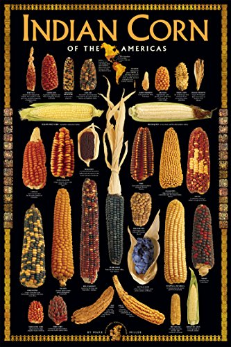 indian corn of the americas - 1