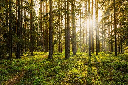 Garden Winds - Gazebo Back Drop Screen Kit - Forest - 114
