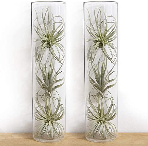 Chive – Set of 2 Cylinder Vase, 2.5 Wide 7 Tall Wall Mounted for Wall Art, Decorative Floral Vase for Wall Mounted Terrariums