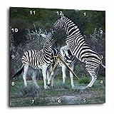 3dRose dpp_188081_3 Burchells Zebra Fighting, Burchellii, Etosha NP, Namibia, Africa Wall Clock, 15 by 15''