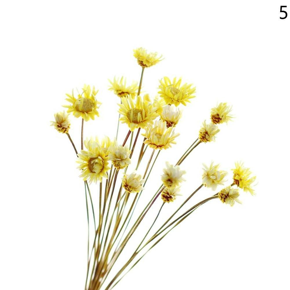 Brazil Daisy Dried Flowers 30 Stems A Bunch Flowers Baby Breath Bouquets Decorative Bouquet Dried Branches Wedding Home DIY Bouquet Party Decor (Red) Snow Island