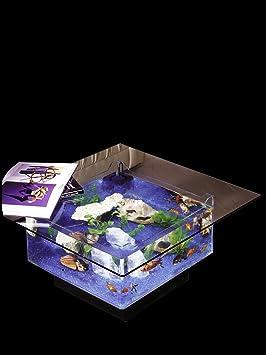 Table Basse Aquarium Newport Par Ambianz Amazon Fr Cuisine