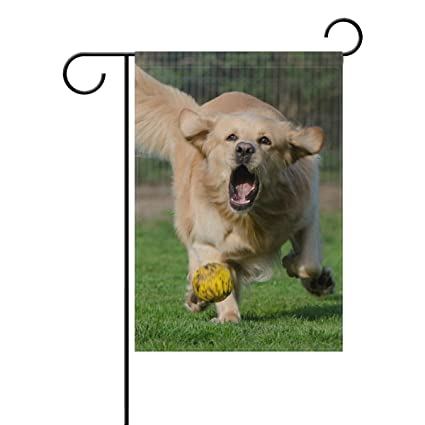 Amazon Com Holisaky Funny Golden Retriever Chase Ball Outdoor