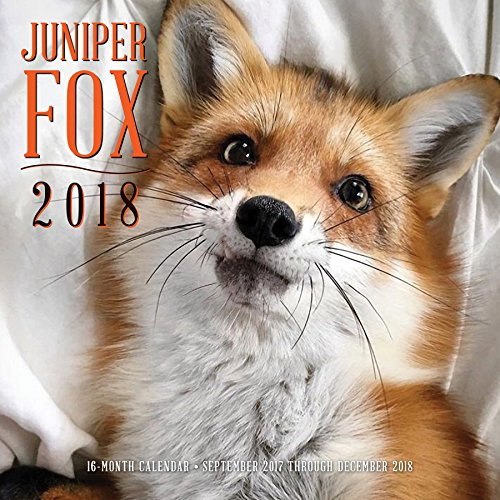 Juniper Fox 2018: 16 Month Calendar Includes September 2017 Through December 2018