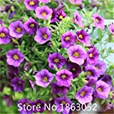 Garden Plant Promotion! 200 Seeds / Pack, Annual Picobella Mix MINI PETUNIA Seeds flower seeds Petunia seeds Seeds