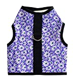 Kitty Holster Cat Harness - Crazy Daisy Purple (SM)
