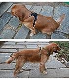 JUXZH Soft  Dog Harness .3M Reflective No Pull