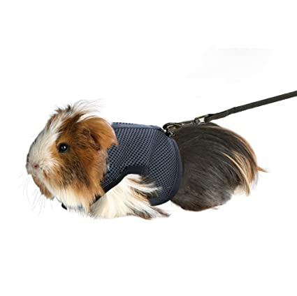 Pet Supplies : Rely2016 Guinea Pig and Rabbit Soft Mesh Harness with
