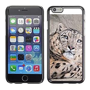 LECELL--Funda protectora / Cubierta / Piel For Apple Iphone 6 Plus 5.5 -- Leopardo de nieve --