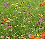 Honeybee Specialty Mix (Mix HB1), 500 Certified Pure Live Seed, True Native Seed