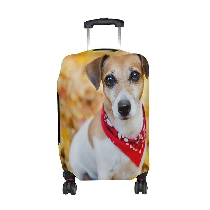 Amazon.com: GiOVANIOR Jack Russell Terrier - Funda ...