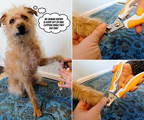 best-dog-nail-clippers-1