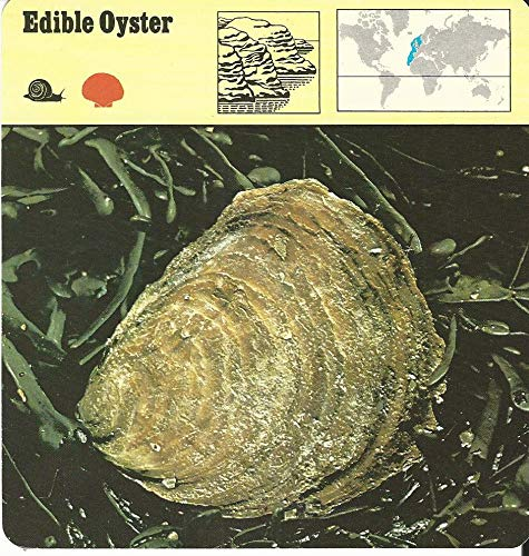 1975 Editions Rencontre, Animals Card, 19.441 Edible Oyster