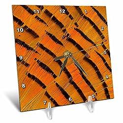3dRose Danita Delimont - Feathers - Golden Pheasant feather fan design, stripes - 6x6 Desk Clock (dc_250125_1)