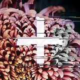 +FE Music: The Reworks [Explicit]