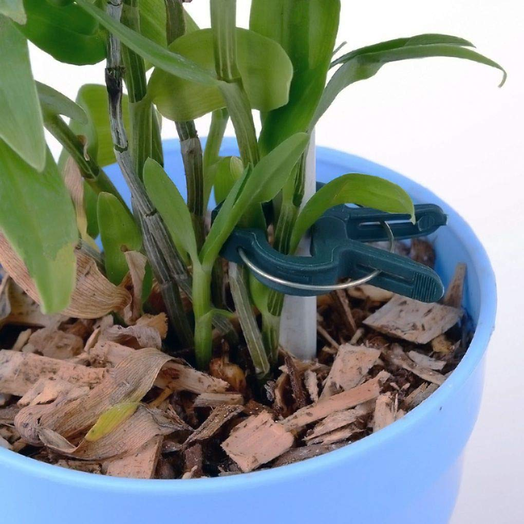 Set 2 Gr/ö/ßen Verpflanzung Clips Graft Pruner Fastener Gem/üse Blume Verpflanzen Schellen Pflanzen Fixierzubeh/ör Republe 20PCS