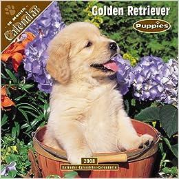 Amazon In Buy Golden Retriever Puppies Book Online At Low Prices In
