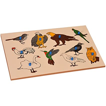 Kidken Montessori Inset Boards: Birds Toy for Develepment and Growth || Kids Playing Instrument