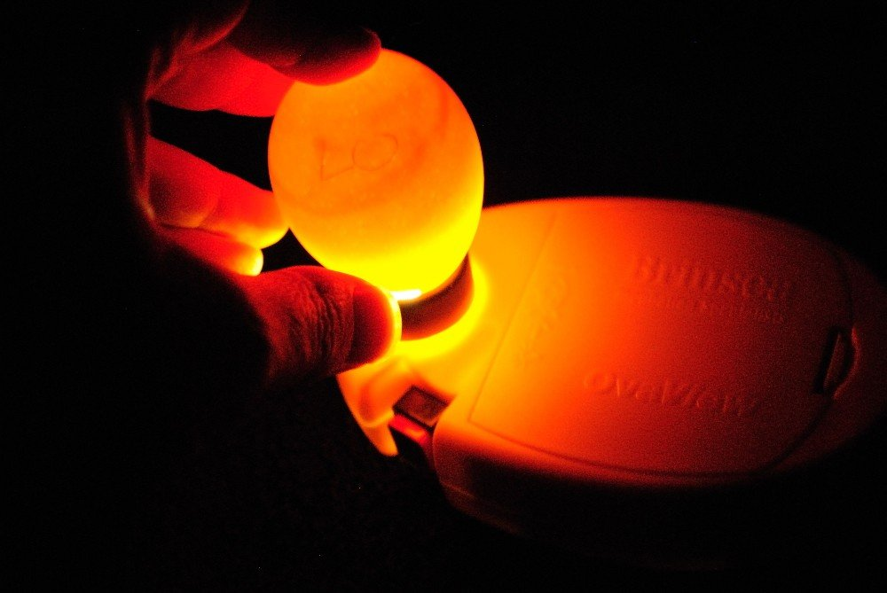 OvaView High Intensity Egg Candler by Avianweb