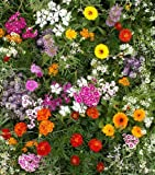 """Fragrant Flower Mix - Grow Fragrant Garden Flowers. Includes: (1) Pre-seeded 17"""" x 5' Flower Seed Mat. Simply Roll out, plant and grow. Instant garden mat for flowering bushes. SEEDS OF: Celosia, delphinium, cosmos, globe amaranth, salvia, sunflowers, zinnia, marigolds and baby's breath"""