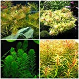13 Species Live Aquarium Plants Package 85