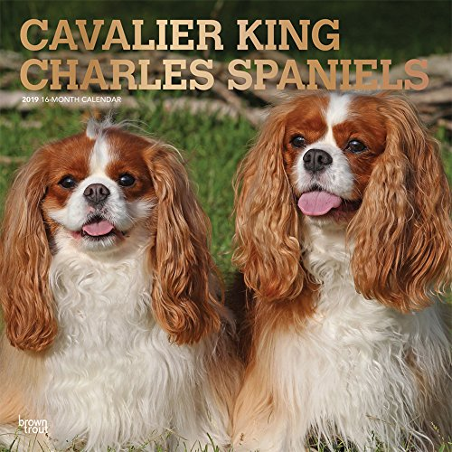 Cavalier King Charles Spaniels 2019 12 x 12 Inch Monthly Square Wall Calendar with Foil Stamped Cover, Animals Dog Breeds Puppies (English, French and Spanish Edition)