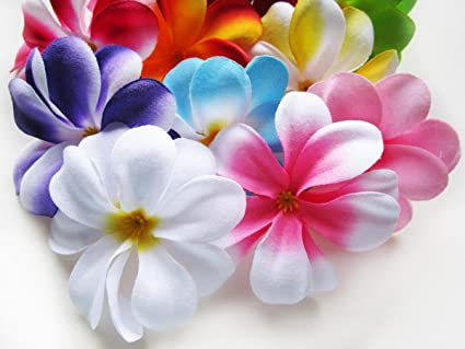 Amazon 100 assorted hawaiian plumeria frangipani silk flower 100 assorted hawaiian plumeria frangipani silk flower heads 3quot artificial flowers mightylinksfo