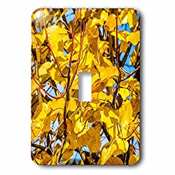 3dRose Alexis Photography - Seasons Autumn - Closeup view of a yellow linden leaves in autumn - Light Switch Covers - single toggle switch (lsp_272211_1)