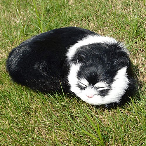 Black Tabby Cat - SIGMALL 8.3
