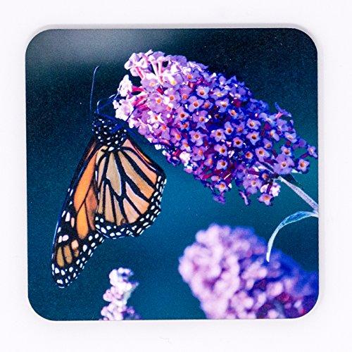 Glossy Photograph (Monarch Butterfly Bush Glossy Hardboard Coaster Photograph)
