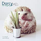 2018 Darcy the Hedgehog Wall Calendar (Day Dream)