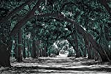 Tunnel of Trees - Teal with Sepia or Gray Background, 20x30 Canvas Wrapped Home Decor Wall Art, Landscape Pictures on Canvas. Wall art for Living Room Bedroom Home Office ) (Gray)