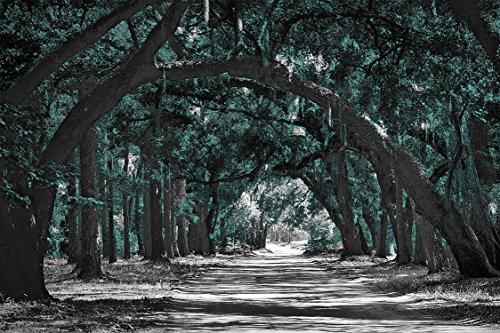 Tunnel of Trees - Teal with Sepia or Gray Background, 20x30 Canvas Wrapped Home Decor Wall Art, Landscape Pictures on Canvas. Wall art for Living Room Bedroom Home Office ) (Gray) by Canvas Wall Art 4 You