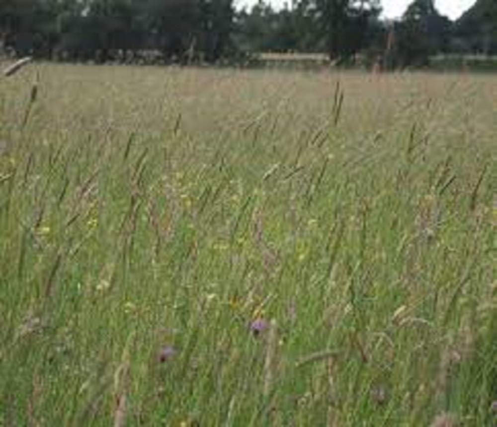 1kg MEADOW GRASS SEEDS MIXTURE 10 SPECIES + CLOVER PASTURE wholesale pretty wild seeds