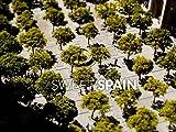 Sweet Spain