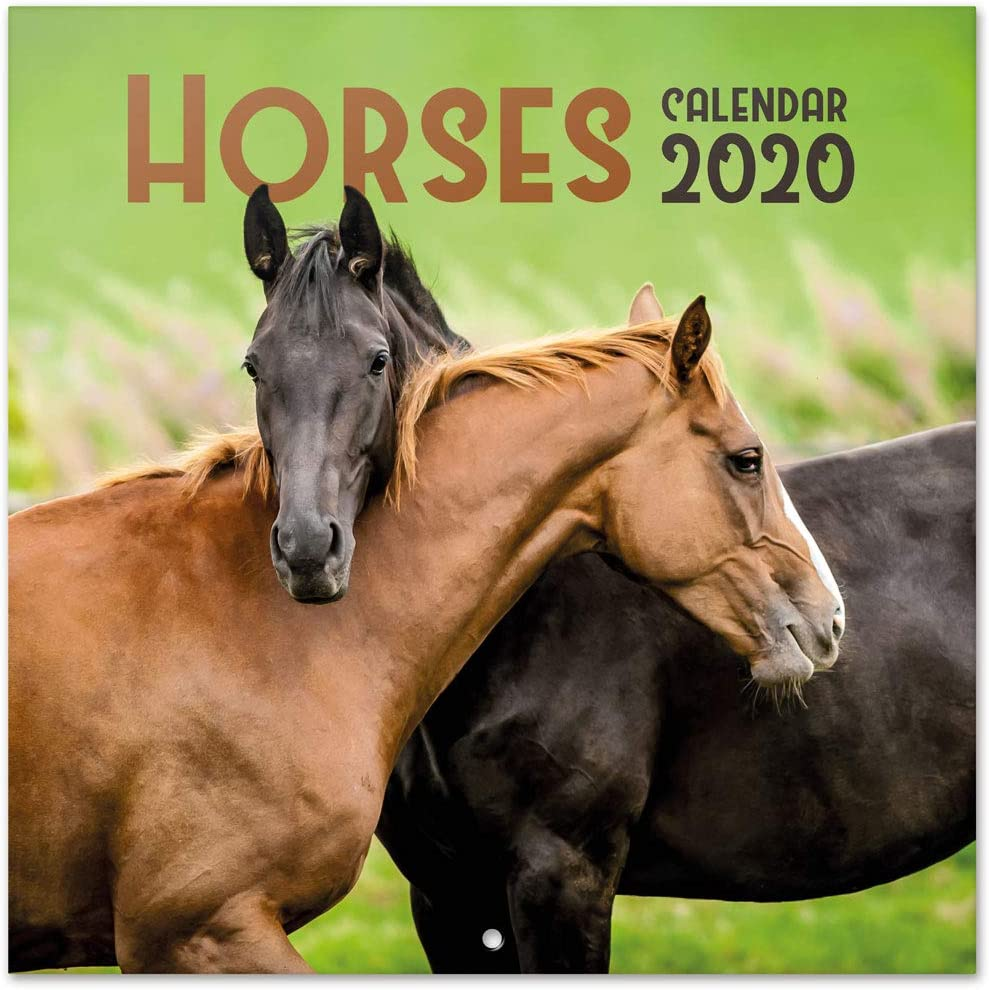 Erik CP20015 - Calendario de Pared 2020 Caballos, 30 x 30 cm