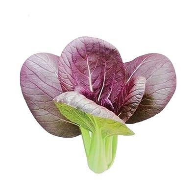 Dark Purple Leaf Bok Choy Pak Choi 1000 Seeds Non-GMO Vegetable : Garden & Outdoor