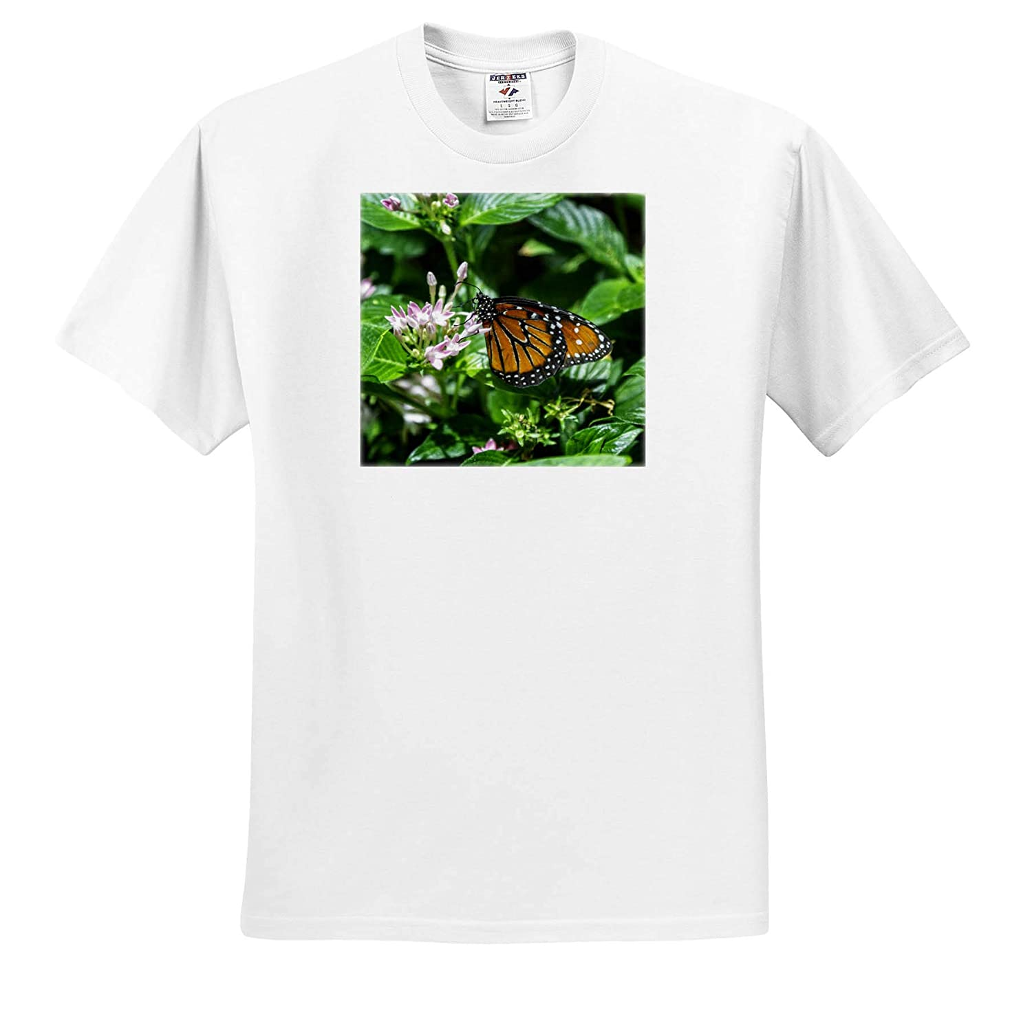 T-Shirts Orange Butterfly 3dRose Mike Swindle Photography Animals