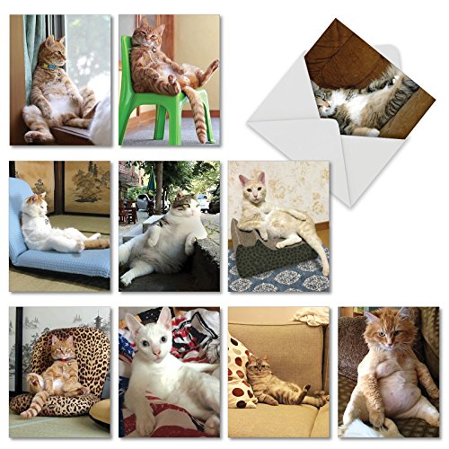 Funny Blank - Sitting Pretty Kitties: 10 Assorted Blank All-Occasion Note Cards Featuring Images of Funny Felines Sitting in Human-like Positions w/White Envelopes. M4613OCB-B1x10