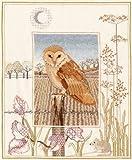Derwentwater Wildlife Series Barn Owl Kit de broderie au point de croix toile Aïda 5,5